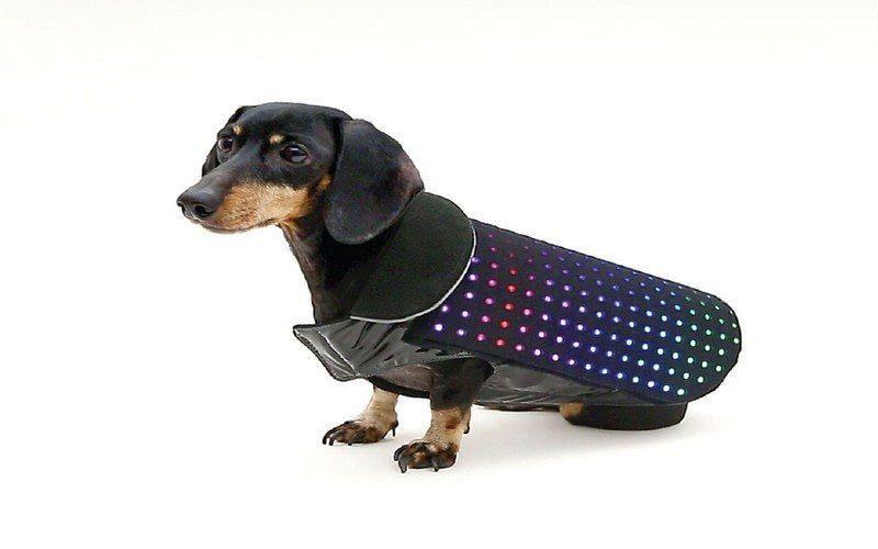 Chaleco Disco Dog